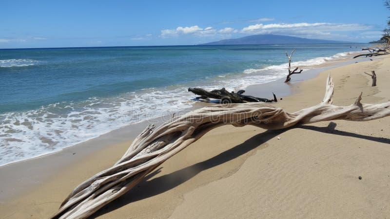 Kręcony driftwood zdjęcia stock