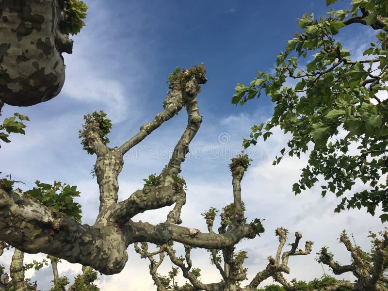 Kręcony drzewo przeciw niebieskiemu niebu blisko jeziora zdjęcia stock