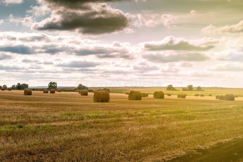 Kręcony haystack na rolnictwa pola krajobrazie obrazy royalty free