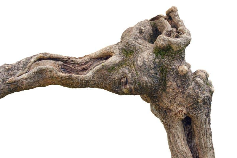 Kręcony tropikalny drzewo fotografia stock