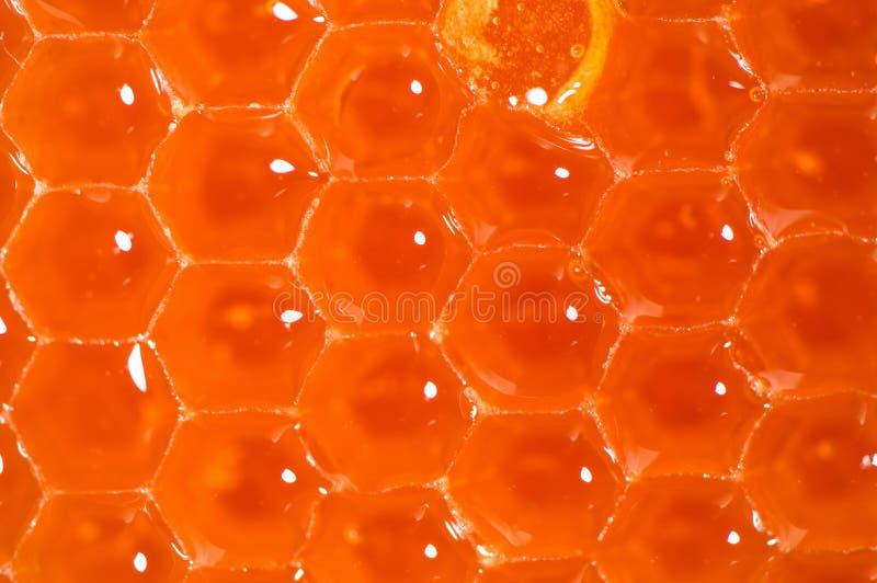 Krańcowy makro-, zamyka w górę Beekeeping produkt Jaskrawi pomarańczowi honeycombs, płynie fragrant świeżego miód fotografia royalty free