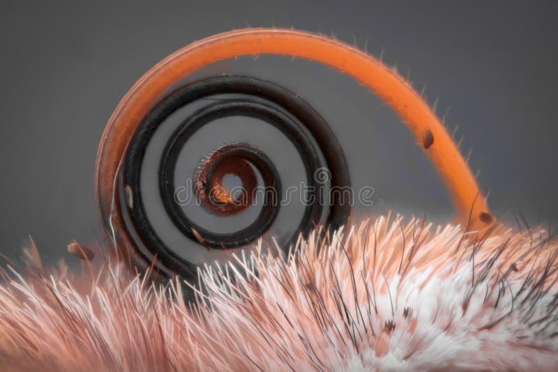 Krańcowy powiekszanie - Motylia kłujka, Vanessa Atalanta obraz royalty free