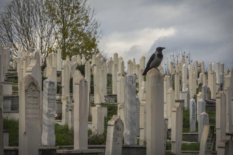 Kraai in de Moslimbegraafplaats Sarajevo Bosnië-Herzegovina royalty-vrije stock foto