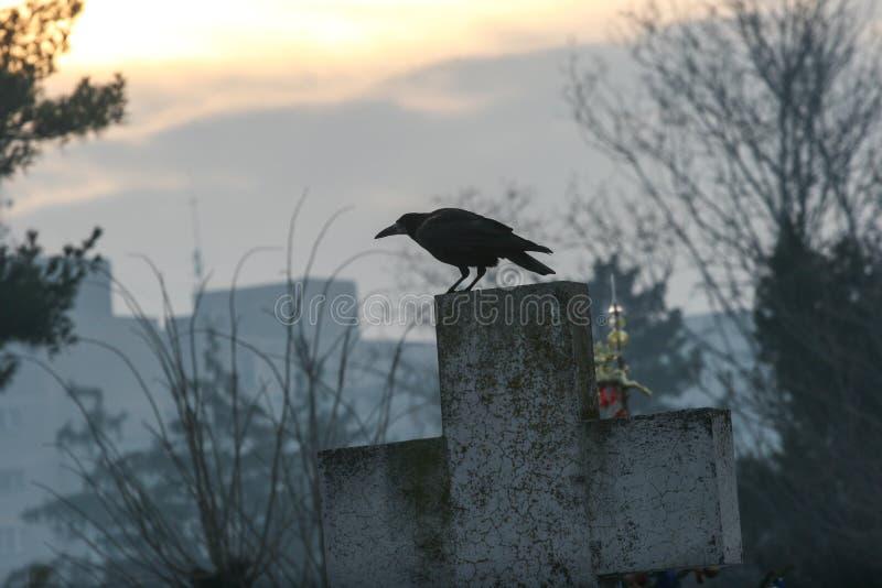 Kraai op een kruis in een begraafplaats stock foto