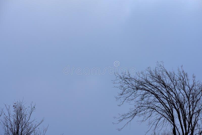 Kraaien in een boom, de winter royalty-vrije stock fotografie