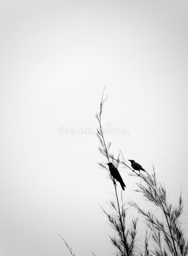 Kraaien op boom hoogste tak stock fotografie