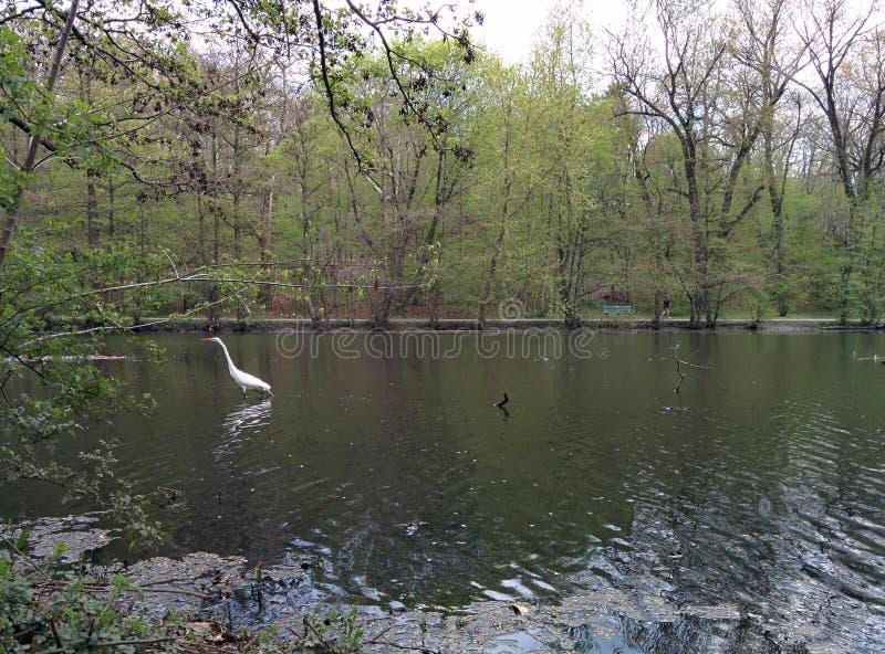 Kraan in het meer stock afbeeldingen