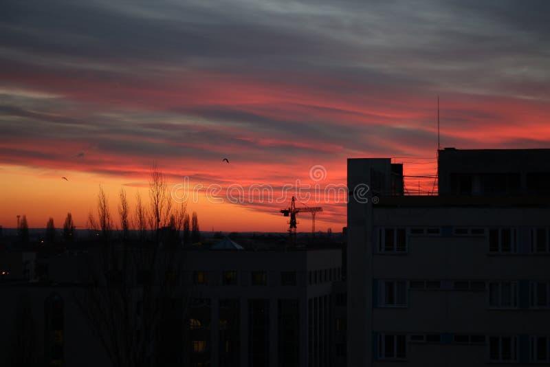 Kraan tijdens zonsopgang royalty-vrije stock afbeeldingen