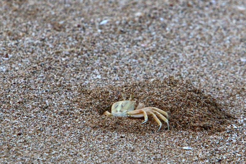 Krab żyje w dziurze na brzeg Śródziemnomorski obraz stock