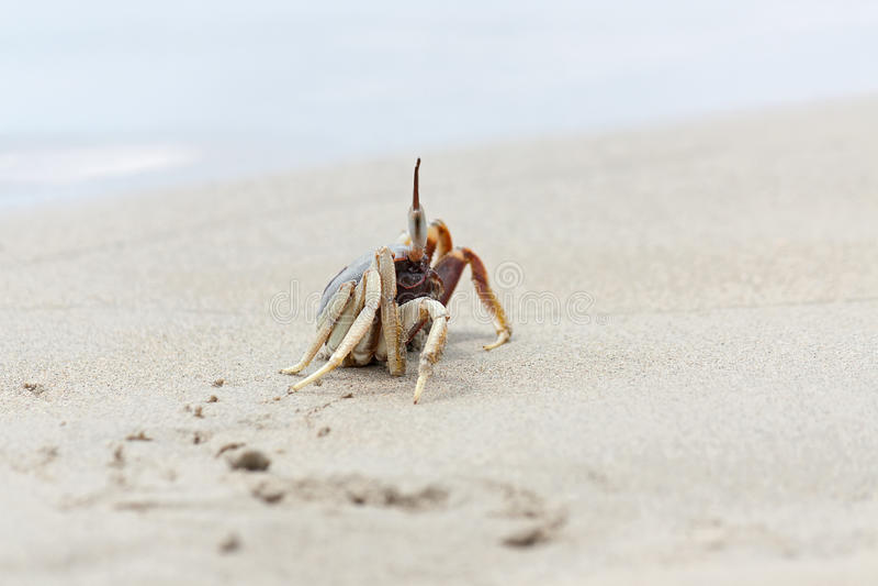 Download Krab zdjęcie stock. Obraz złożonej z piasek, tajlandia - 28954766