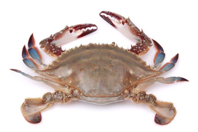 Krab royalty-vrije stock foto's
