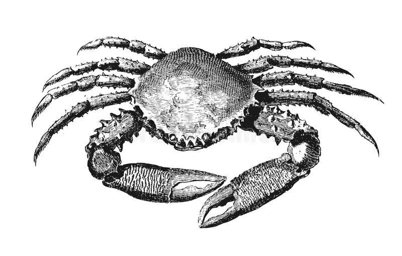 Krab royalty ilustracja