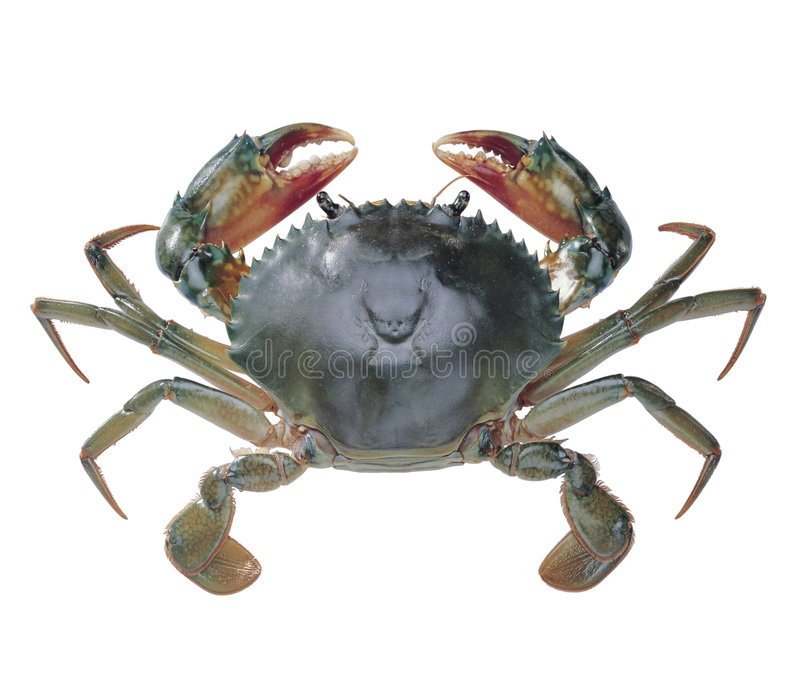 Krab stock fotografie