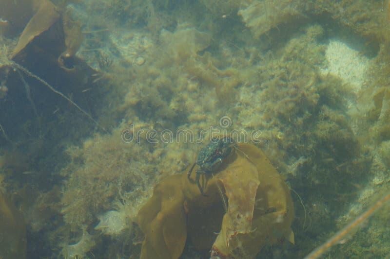 Krab royalty-vrije stock fotografie