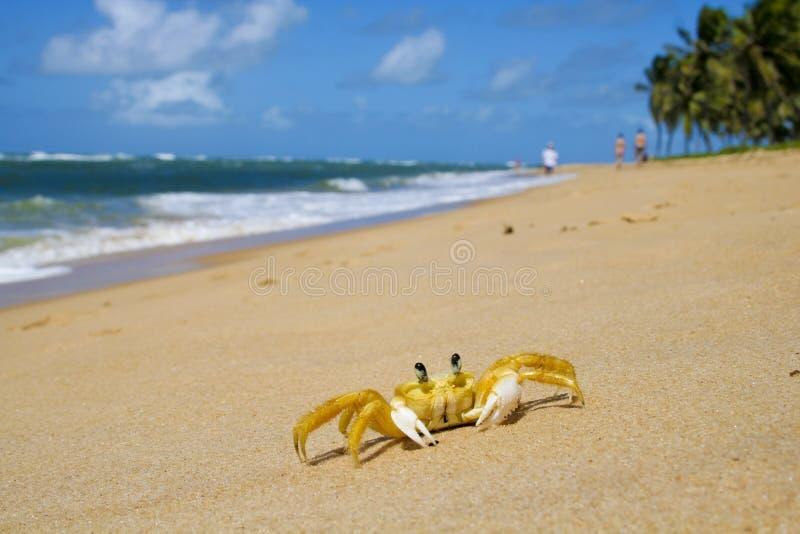 Krab bij strand stock afbeeldingen