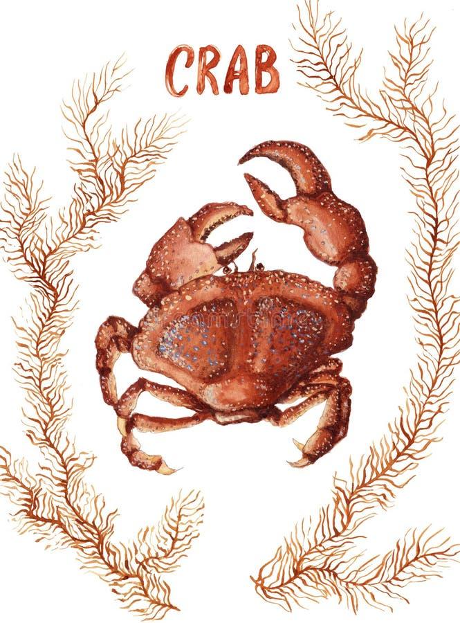 Krab en zeewier vector illustratie