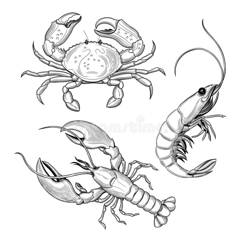 Krab, garnela, homar Owoce morza royalty ilustracja