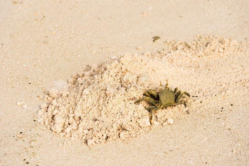 Krab op een zandig strand, de Maldiven, Indische Oceaan Exemplaarruimte voor tekst royalty-vrije stock fotografie