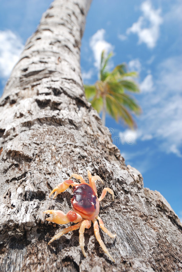 Krab op palm royalty-vrije stock fotografie