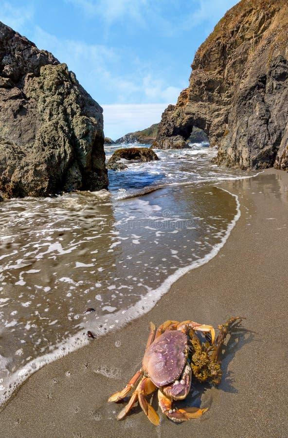 Krab op Rocky Beach stock foto