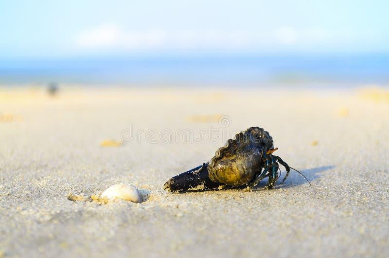 Krab op strand royalty-vrije stock afbeelding