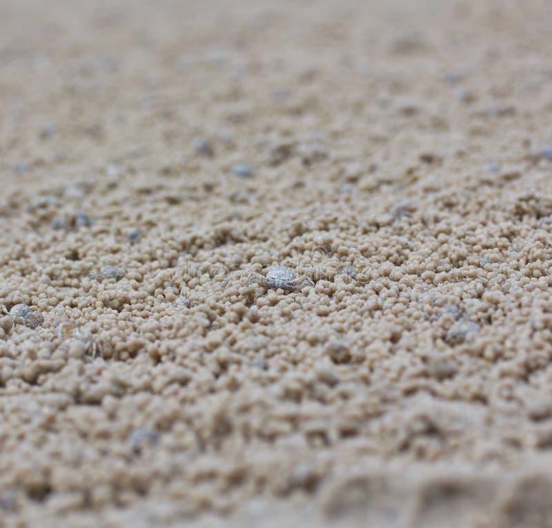 Download Krab robi piasek piłkom obraz stock. Obraz złożonej z zwierzę - 41952285