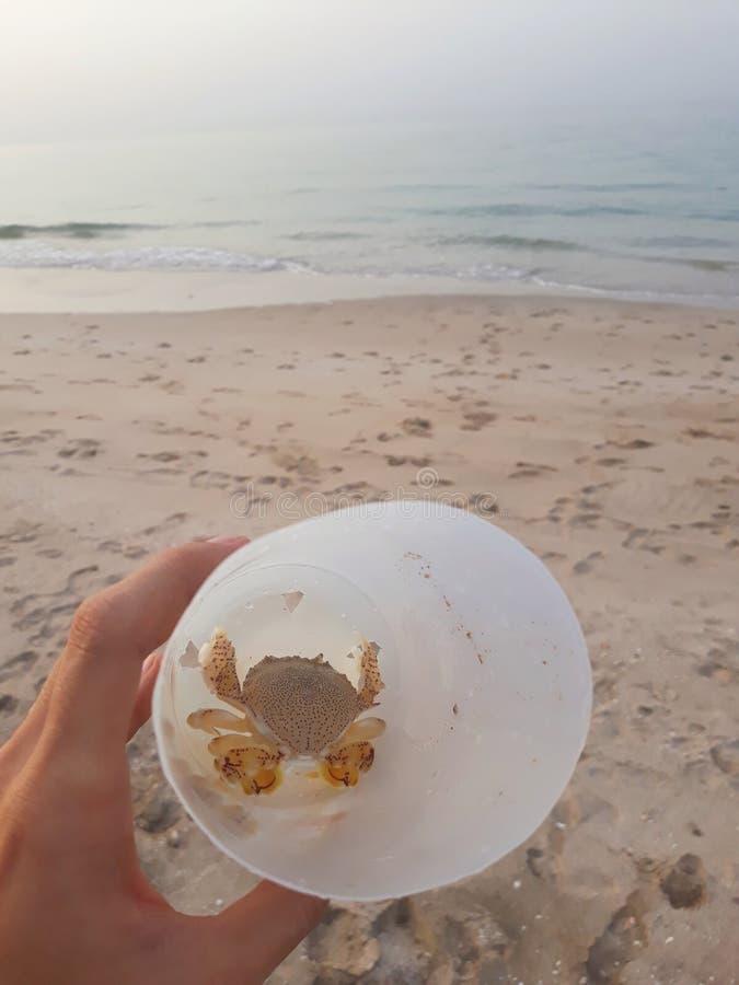 Kraba chwyta kraby obrazy stock