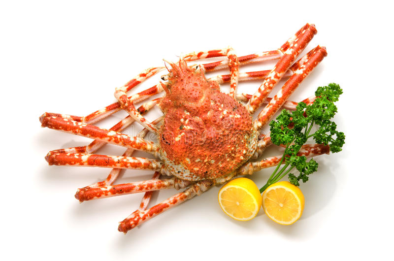 kraba gigant zdjęcie royalty free