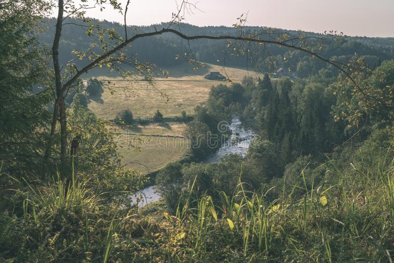 krabb flod i skog i grön sommar - retro blick för tappning arkivfoto