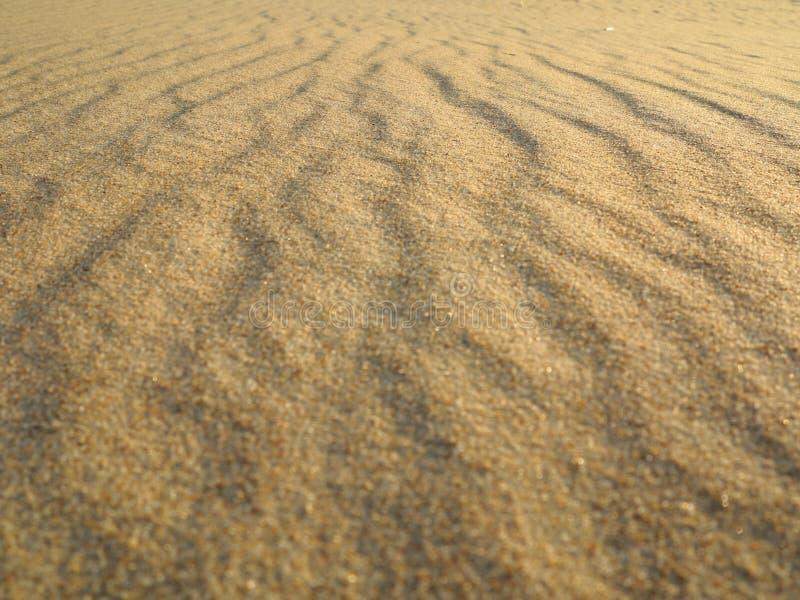 Krabb gul sandtexturbakgrund arkivbilder