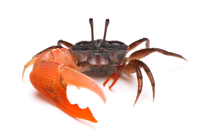 krabba arkivfoto
