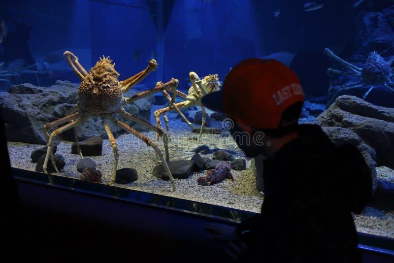 Krabba för djupt hav royaltyfria foton