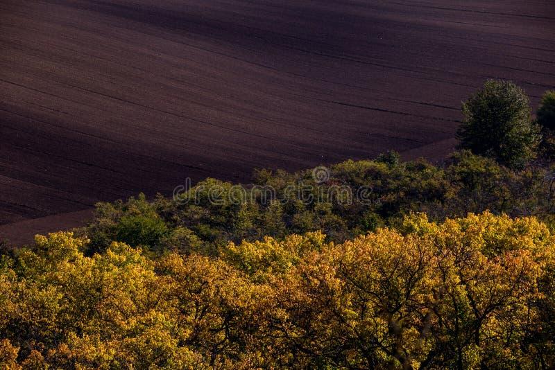 Krabba höstfält i Moravian Tuscany, Tjeckien arkivfoton