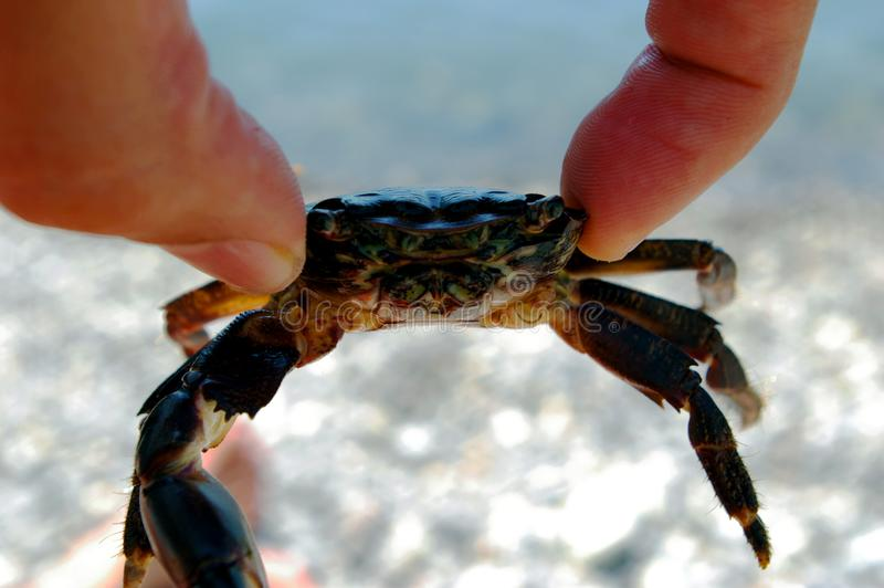 Krabba i händer på bakgrunden av havet royaltyfria foton