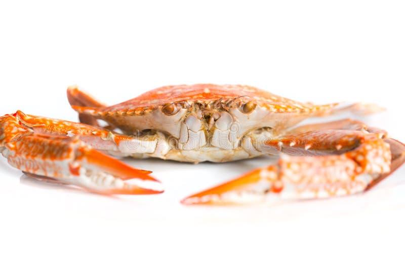 krabba isolerad white royaltyfri foto