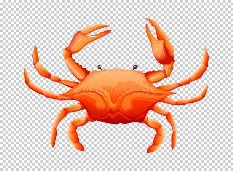 Krabba på genomskinlig bakgrund vektor illustrationer