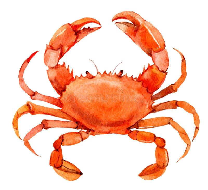 Krabba som isoleras på vit bakgrund, vattenfärg stock illustrationer