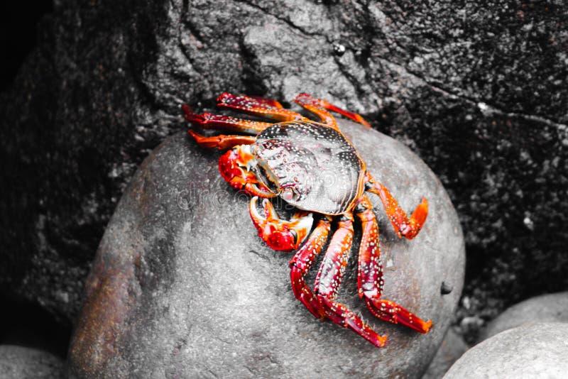 Krabba som vilar på en vagga royaltyfri fotografi