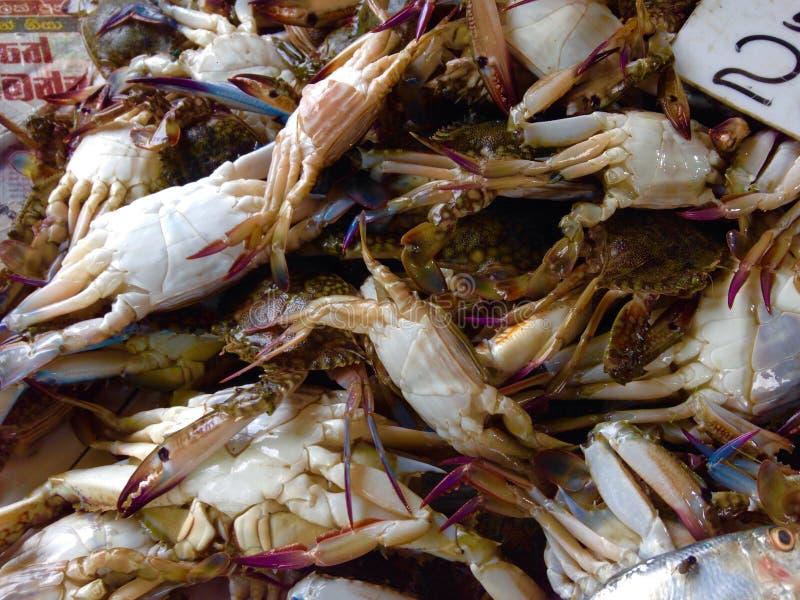 krabbaförsäljning royaltyfri fotografi