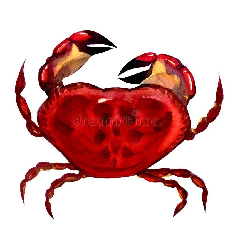 krabbamålningsvattenfärg vektor illustrationer