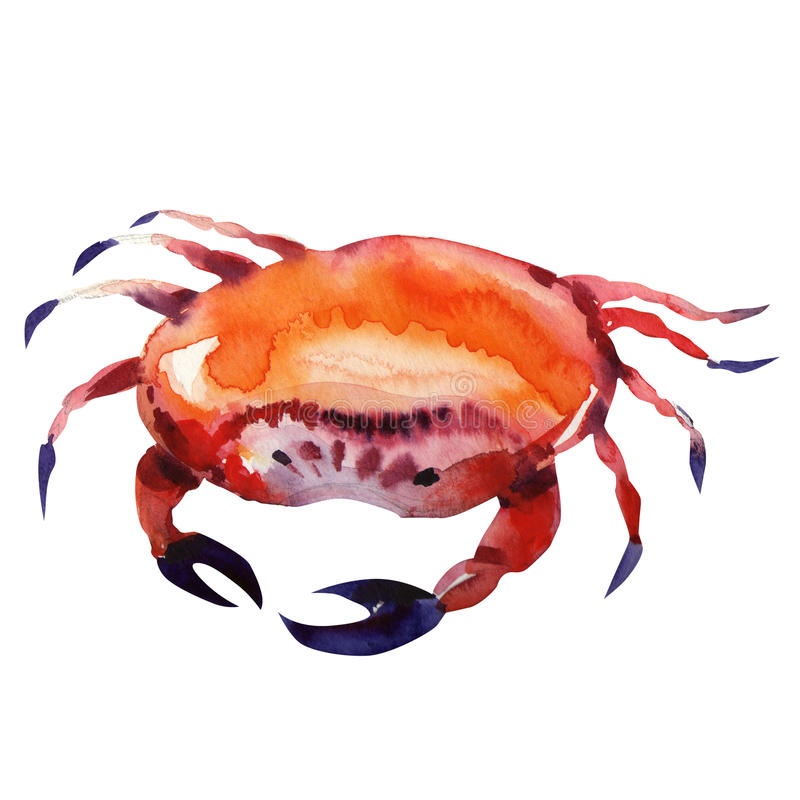 krabbamålningsvattenfärg royaltyfri illustrationer