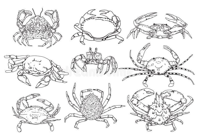 Krabban skissar uppsättningen Hand dragen samling av skaldjur Vektor Illust vektor illustrationer
