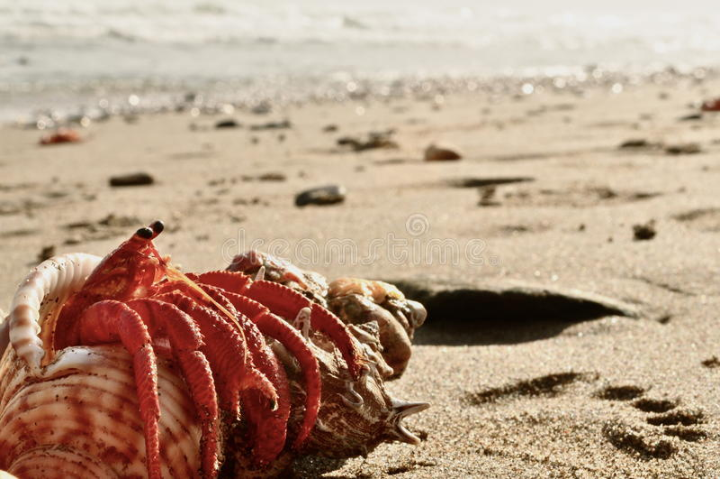 Krabbe stockfotos