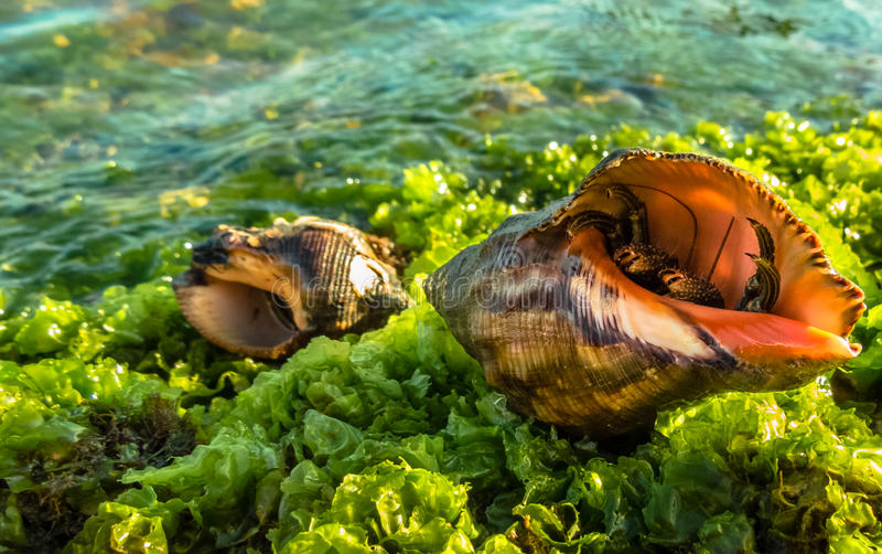 Krabbe lizenzfreies stockbild