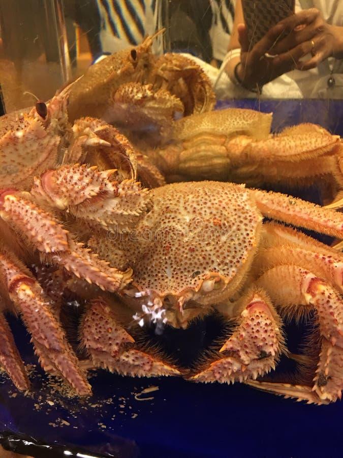 Krabbe lizenzfreie stockbilder