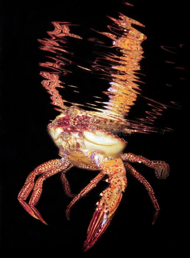 Krabbe nachts lizenzfreies stockfoto