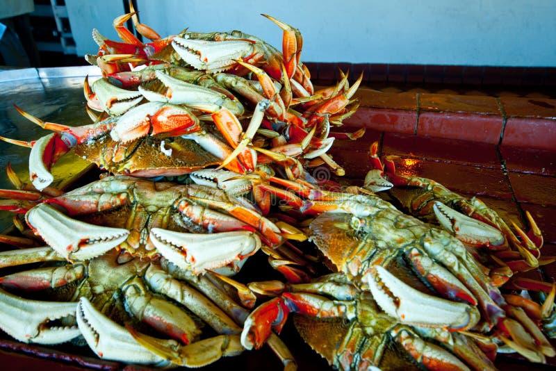 Krabben bij pijler 52 royalty-vrije stock foto's