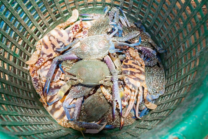 Krabben in mand royalty-vrije stock foto