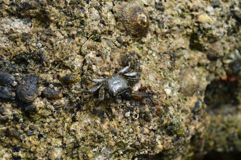 Krabben op de rots royalty-vrije stock afbeelding