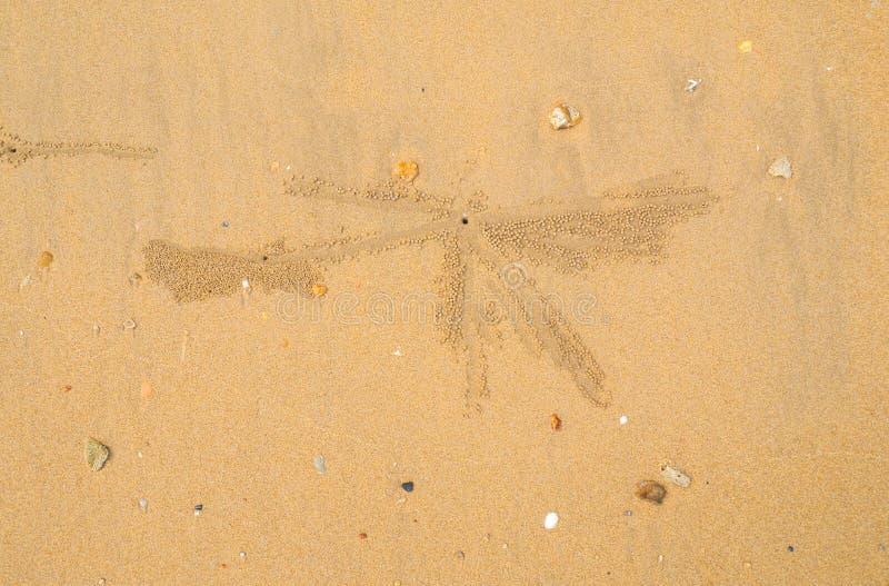 Krabbenlöcher auf dem Strandsand - Haupt von einer Geistkrabbe, Sandtrinkwasserbrunnen c stockfotografie